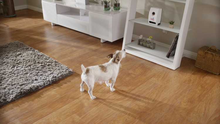 smart-home-device-for-pets