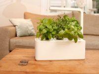 smart-home-herb-garden