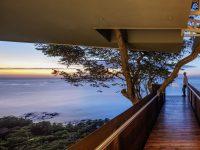architecture-around-trees
