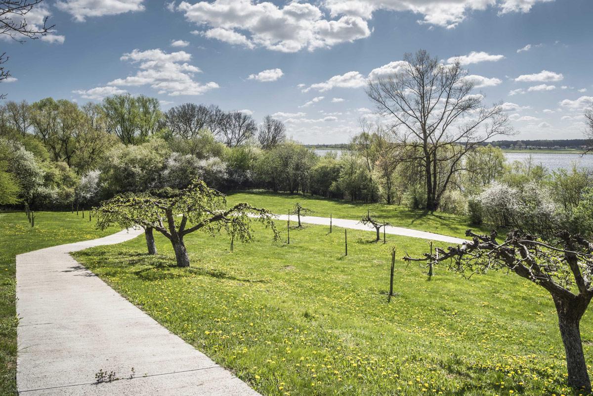 hillside-landscape