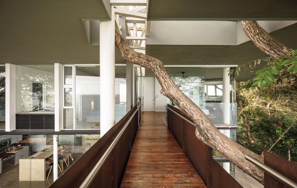 tree-top-balcony