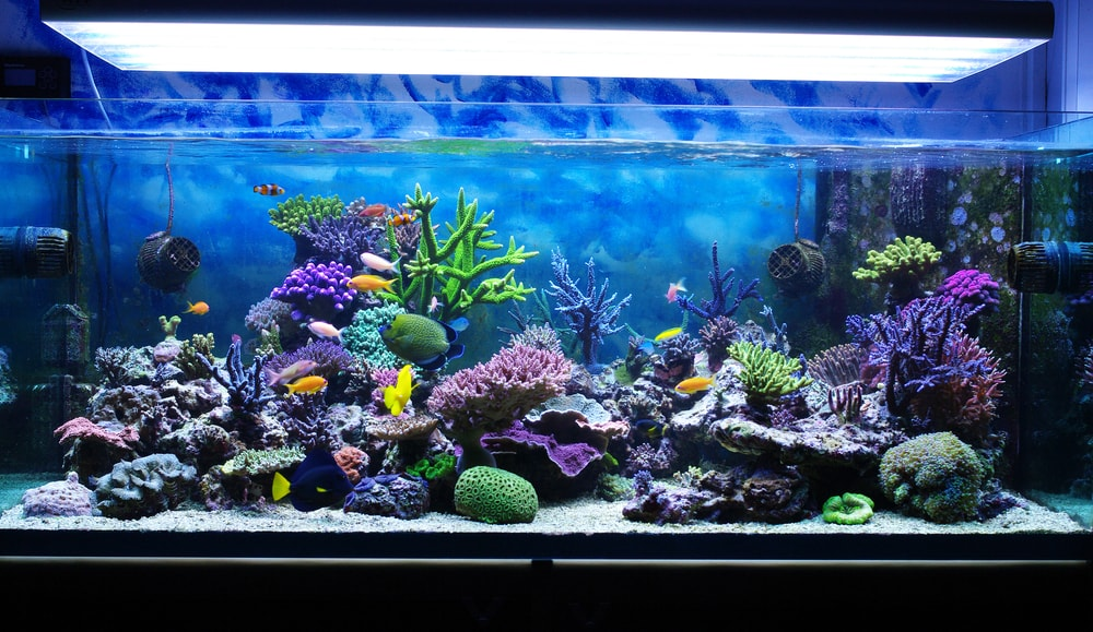 Different Types of Aquarium