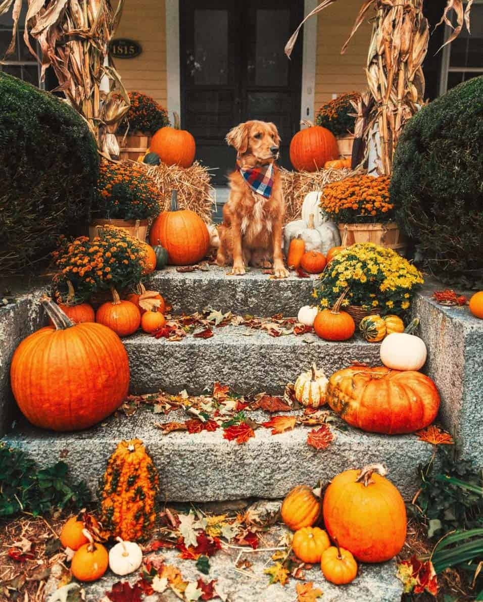 Front-Porch-Decorating-Ideas-For-Fall-17-1-Kindesign