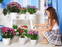 Inch-Flower-Pot-Indoor-Modern-Decorative